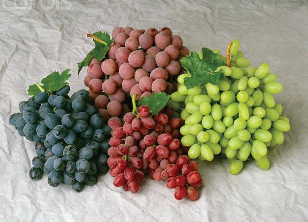grape-variety