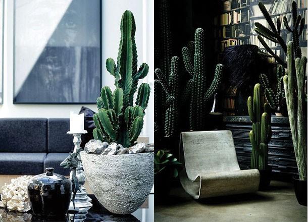5 Best Indoor Plants For Men Urban Oasis Cool