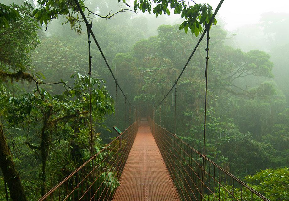 10 Of The Worlds Wildest Rainforests Amp Jungles To Trek