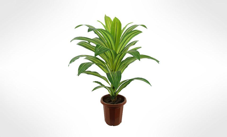 indoor plants nasa - photo #29
