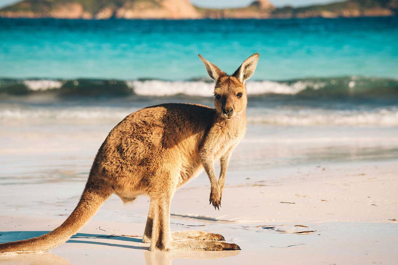 Australia Bounds One Step Closer To 'Normal' International Travel